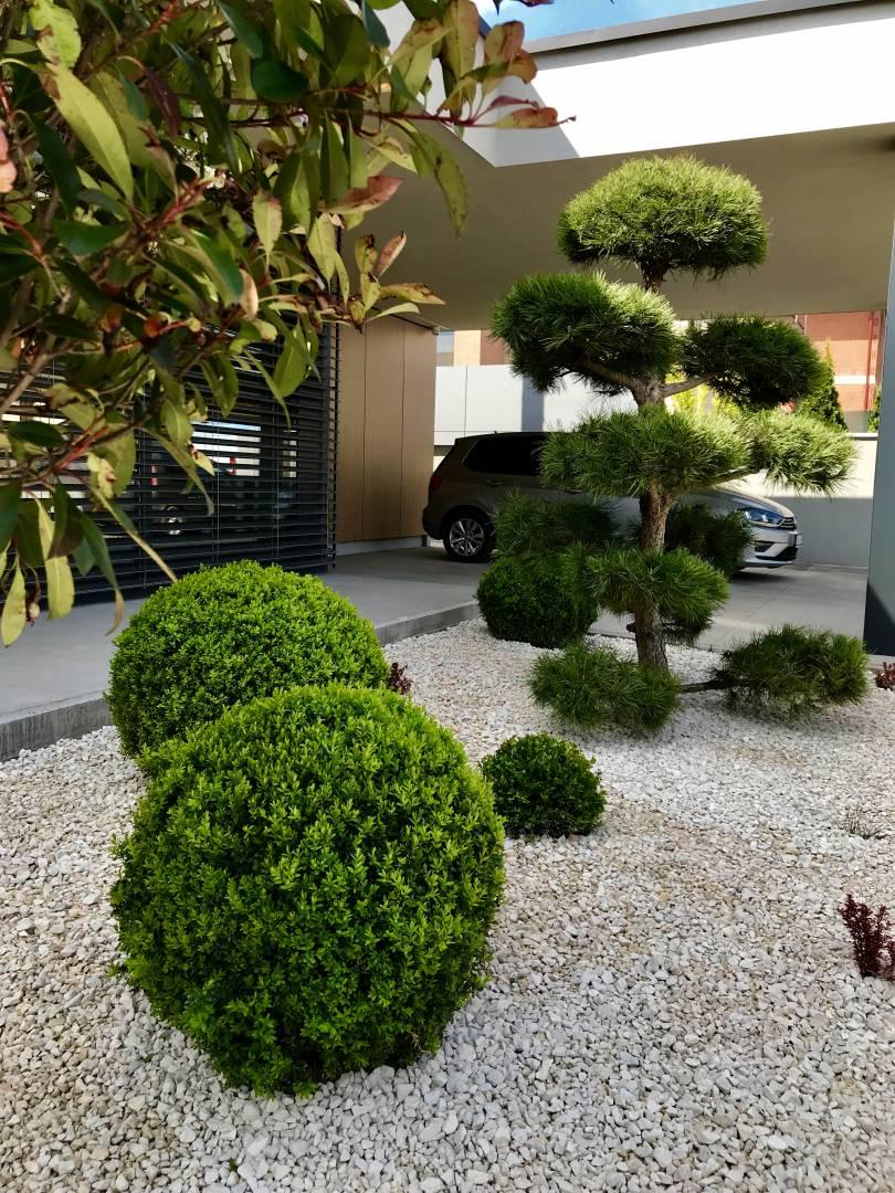 Moderna zahrada Bonsai
