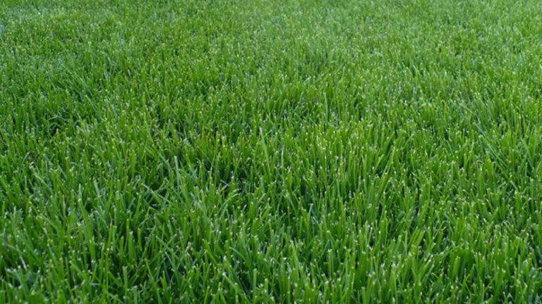 Výsadby trávnikov (výsevom; pokládky trávnych kobercov)